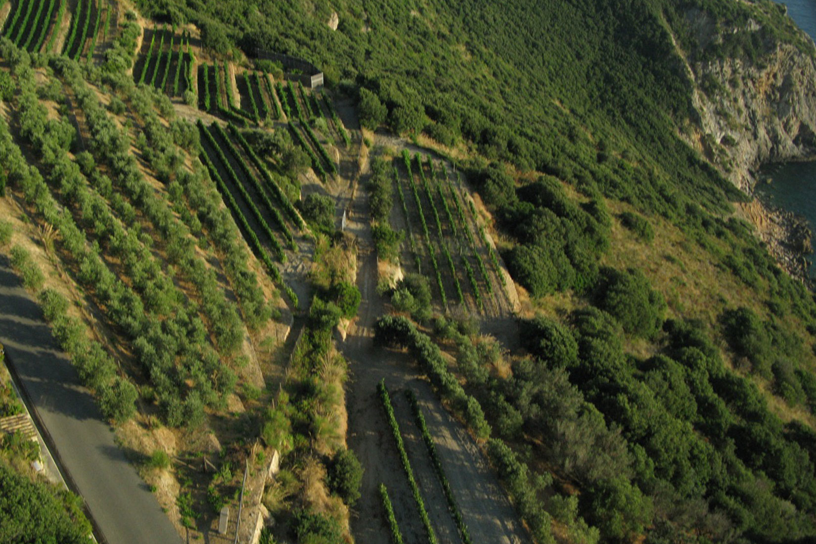 Vineyards And Olive Groves At Capo D'Uomo
