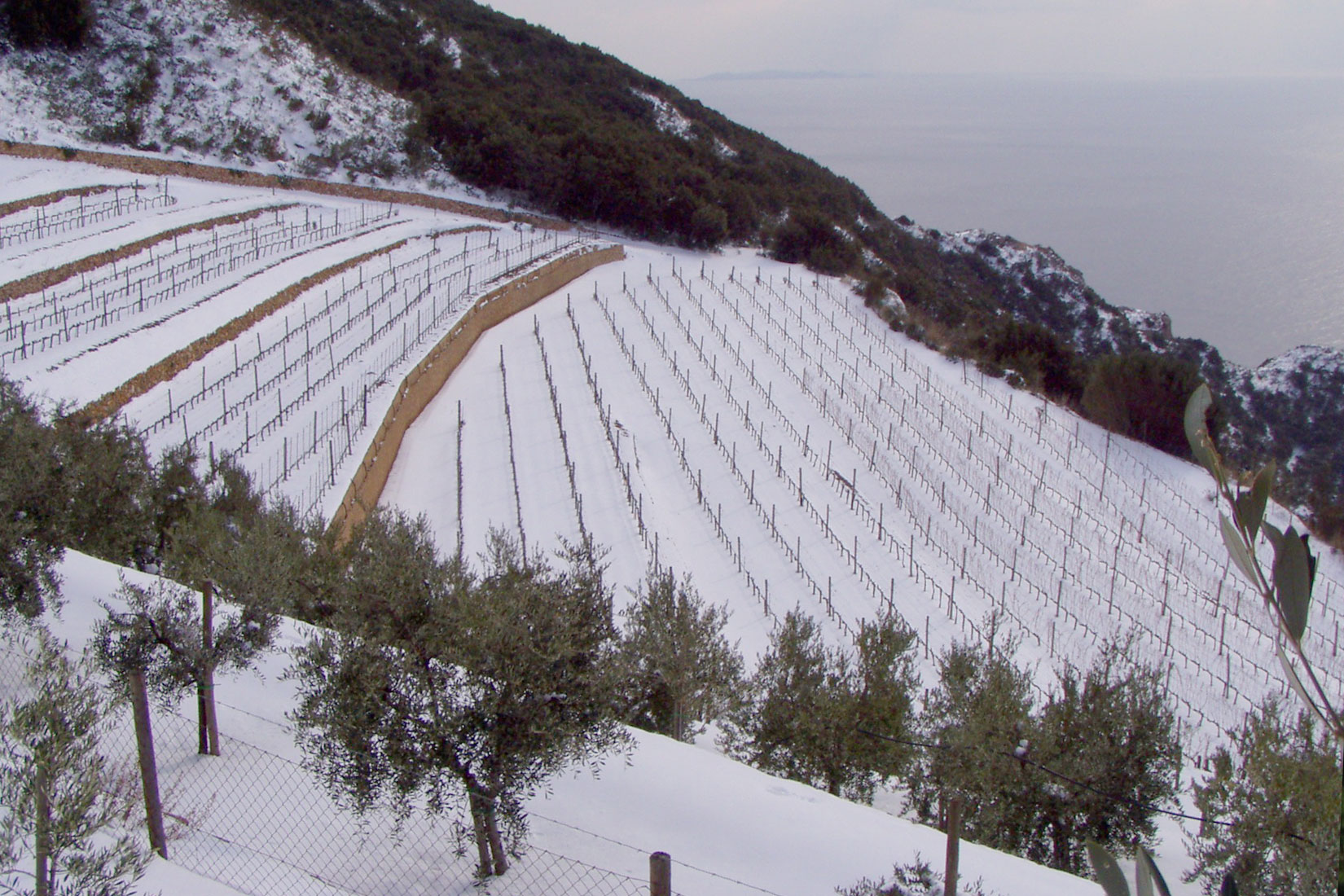 Capo D'Uomo In The Snow
